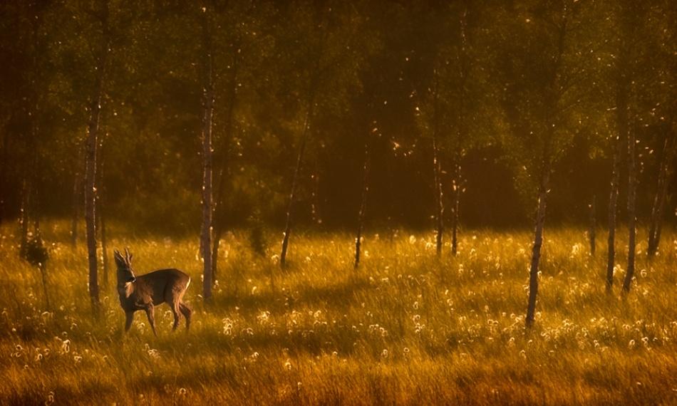 A piece of fine art art photography titled Deer by Mika Sjöman