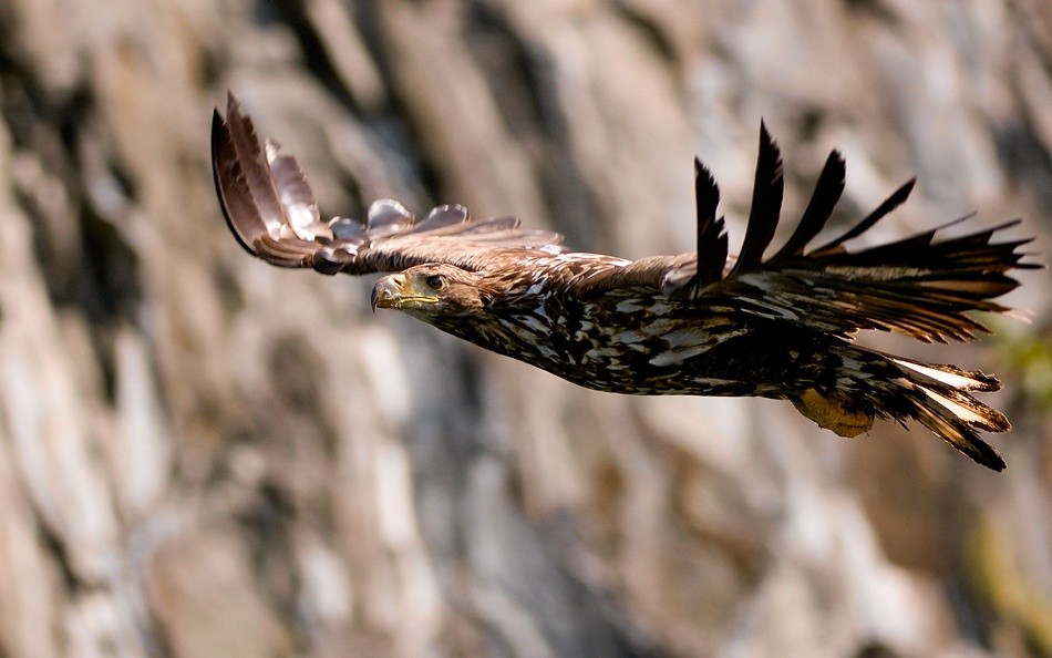 A piece of fine art art photography titled White-tailed Eagle by Olof Petterson