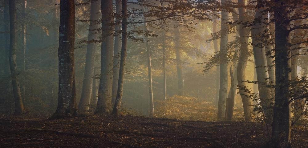 A piece of fine art art photography titled Autumn Days by Norbert Maier