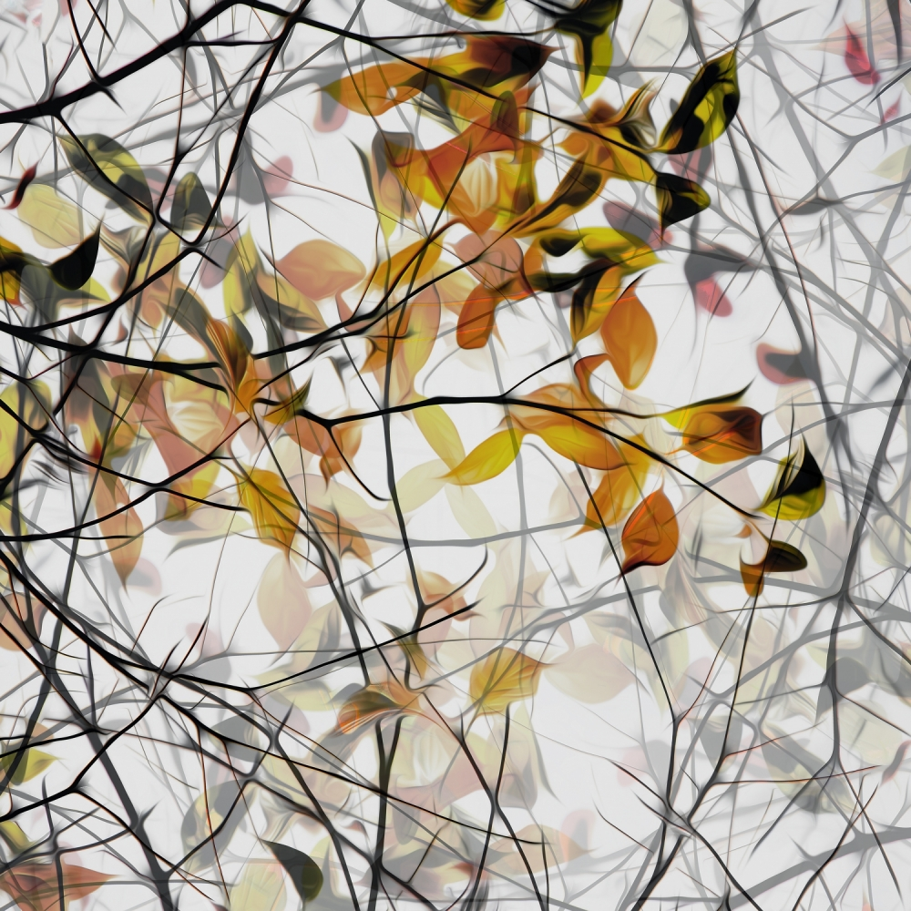 A piece of fine art art photography titled Autumn Song by Gilbert Claes