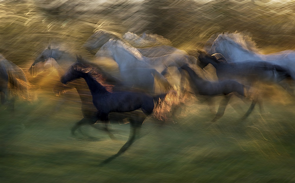 A piece of fine art art photography titled Fiery Gallop by milan malovrh