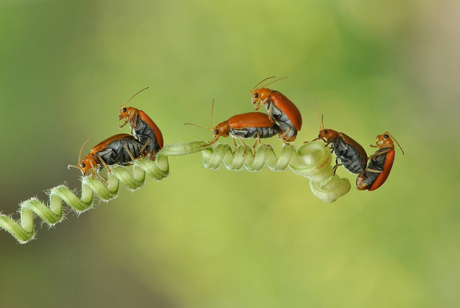 A piece of fine art art photography titled Three Marriages by Nordin Seruyan