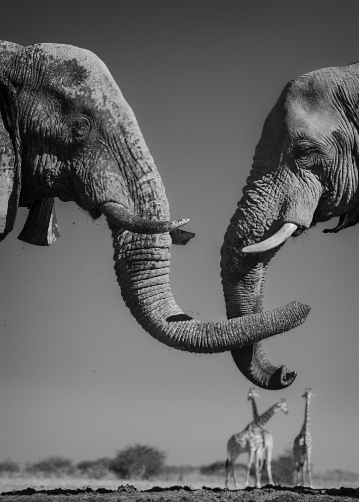 A piece of fine art art photography titled The Handshake by Morkel Erasmus