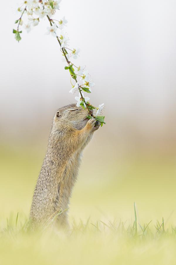 A piece of fine art art photography titled Fragrance of Spring by Henrik Spranz