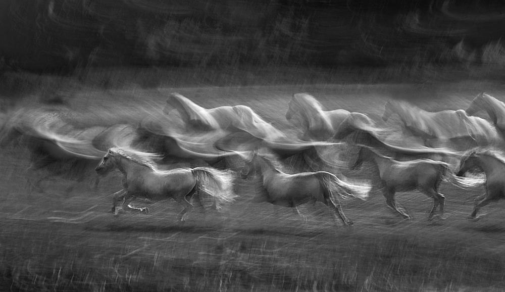 A piece of fine art art photography titled Stampedo by milan malovrh