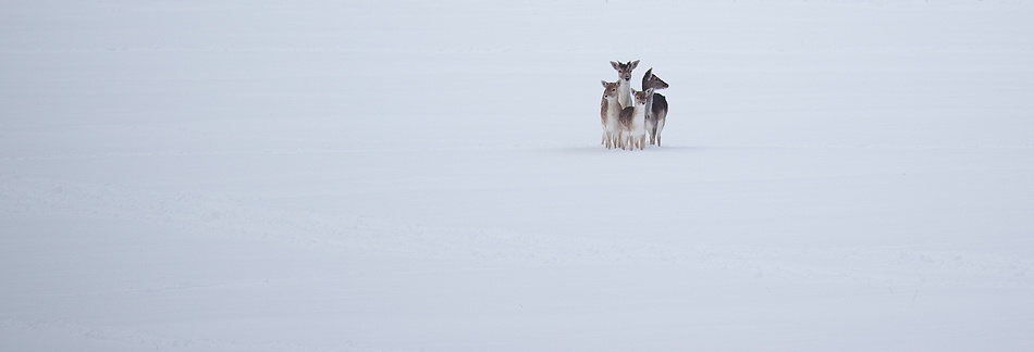 A piece of fine art art photography titled Snowed In by Alex Saberi