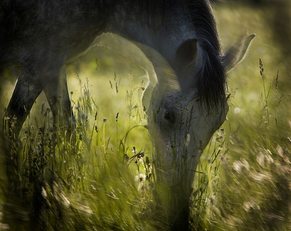 A piece of fine art art photography titled On Pasturage by milan malovrh