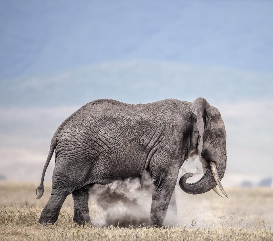 A piece of fine art art photography titled Dust Bath by Wim van den Heever