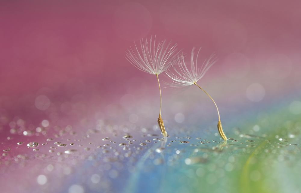 A piece of fine art art photography titled Melody Fair by Judy Tseng