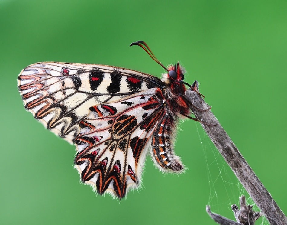 A piece of fine art art photography titled Butterfly by Mario Glavas