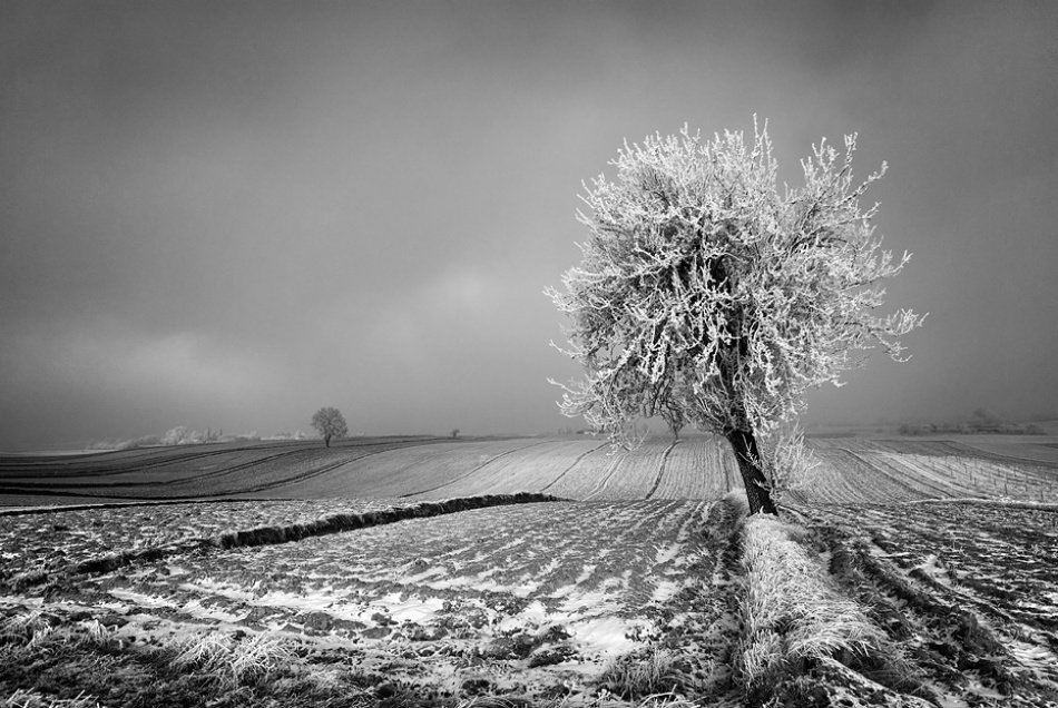 A piece of fine art art photography titled White Tree by Adam Holweg