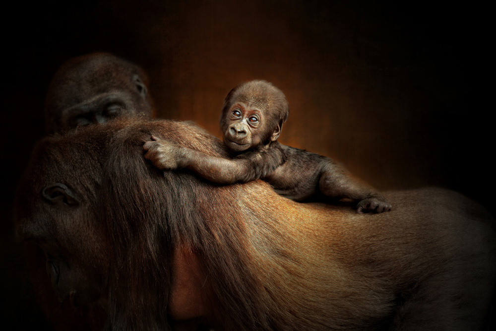 A piece of fine art art photography titled New Life by Antje Wenner-Braun