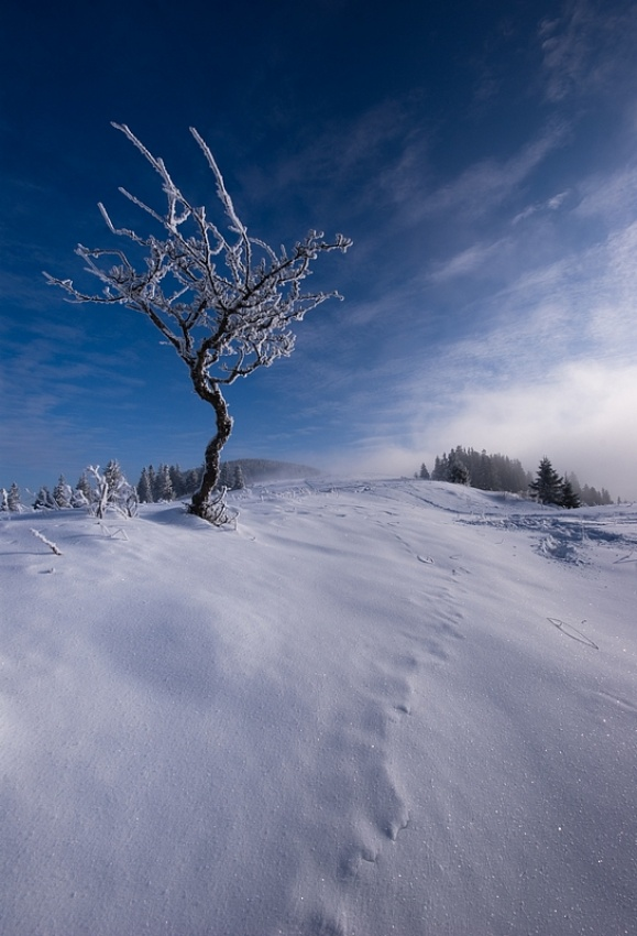 A piece of fine art art photography titled In the Winter by Matus Hrubovsky