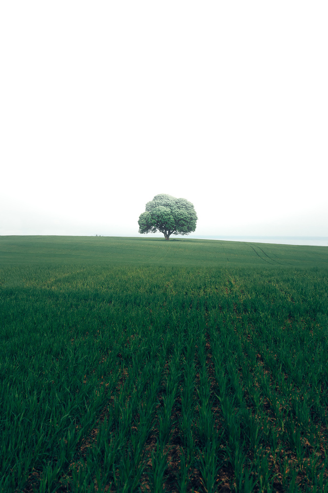 A piece of fine art art photography titled The Lonely Oak Tree by Christian Lindsten