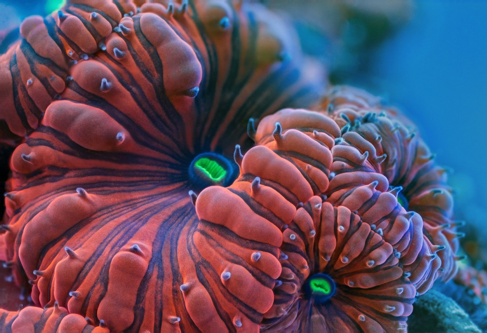 A piece of fine art art photography titled Fluorescent Colors of the Reef by Daniel Stoupin