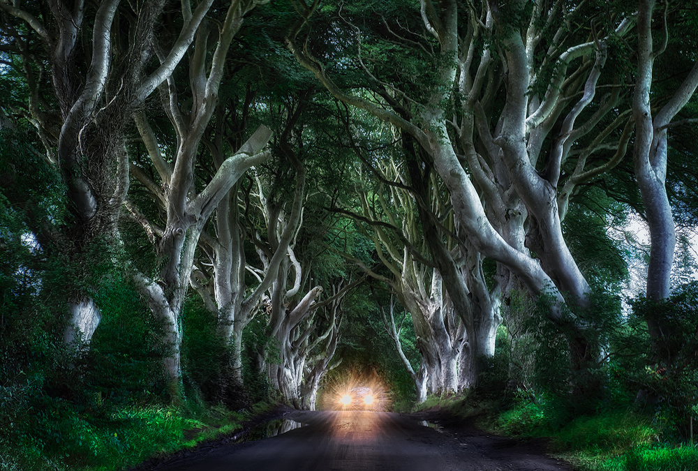 A piece of fine art art photography titled The Dark Hedges by Aida Ianeva