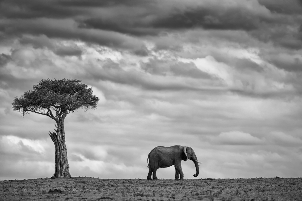 A piece of fine art art photography titled Elephant Landscape by Mario Moreno