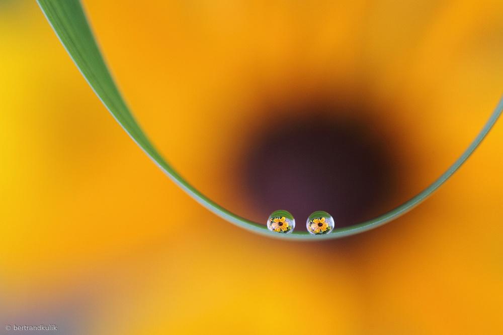 Eyes of flowers