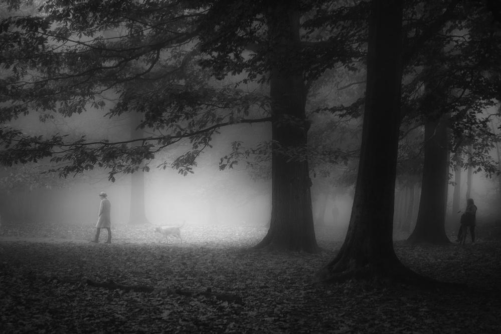 Mysterious Mastforest