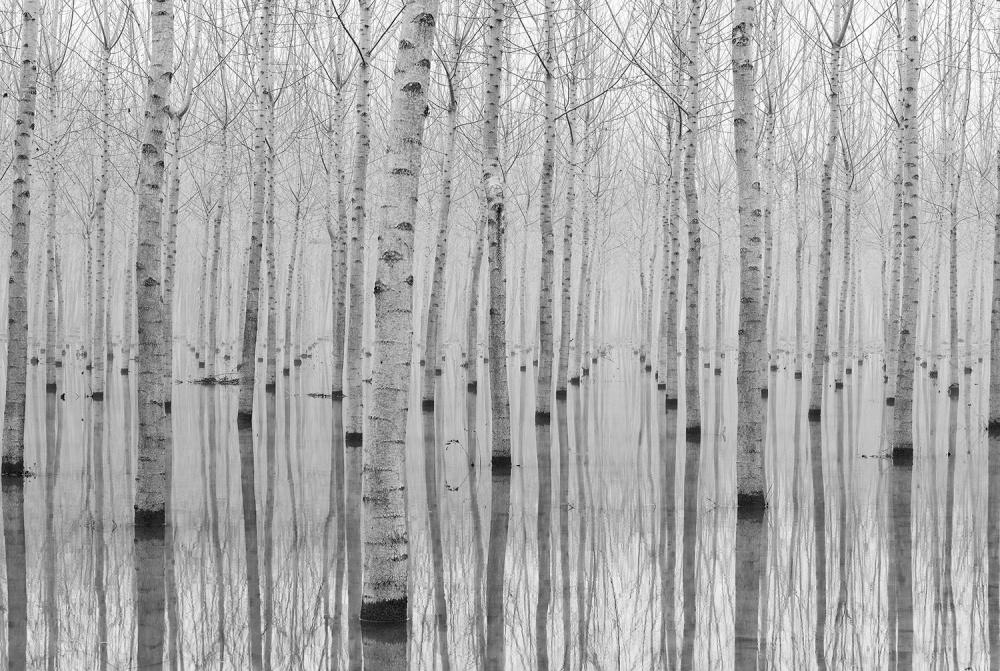 A piece of fine art art photography titled Novembre 2014 by Aglioni Simone