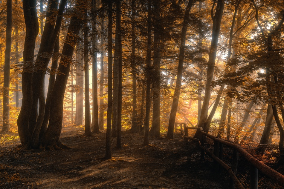 A piece of fine art art photography titled October Morning by Norbert Maier