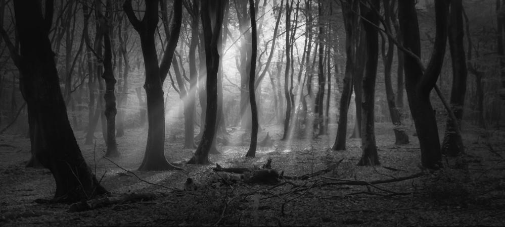 A piece of fine art art photography titled Black Magic by Saskia Dingemans