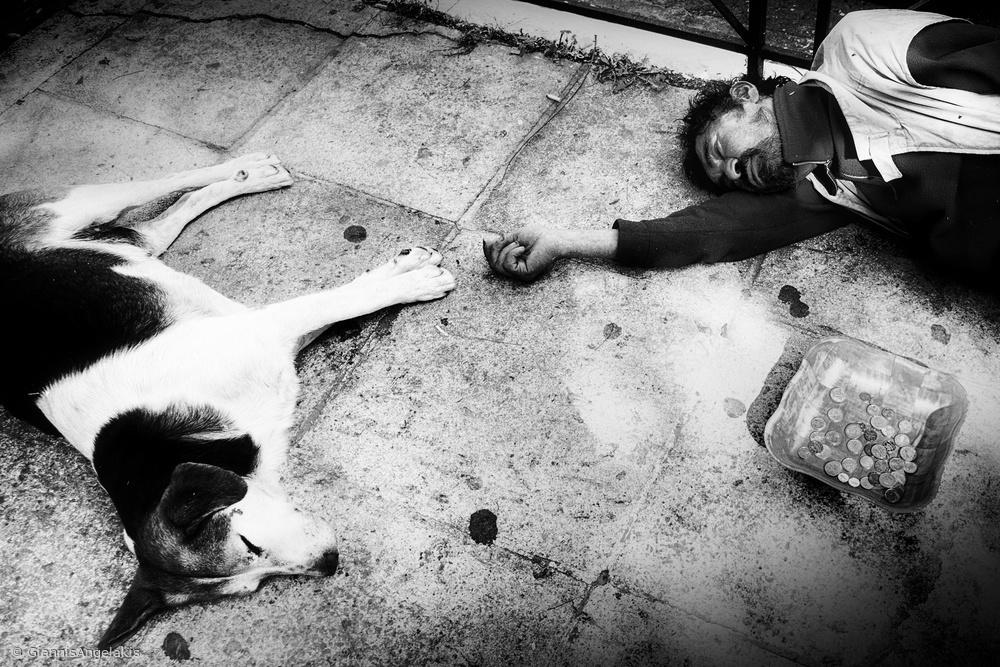 Homeless and stray dog