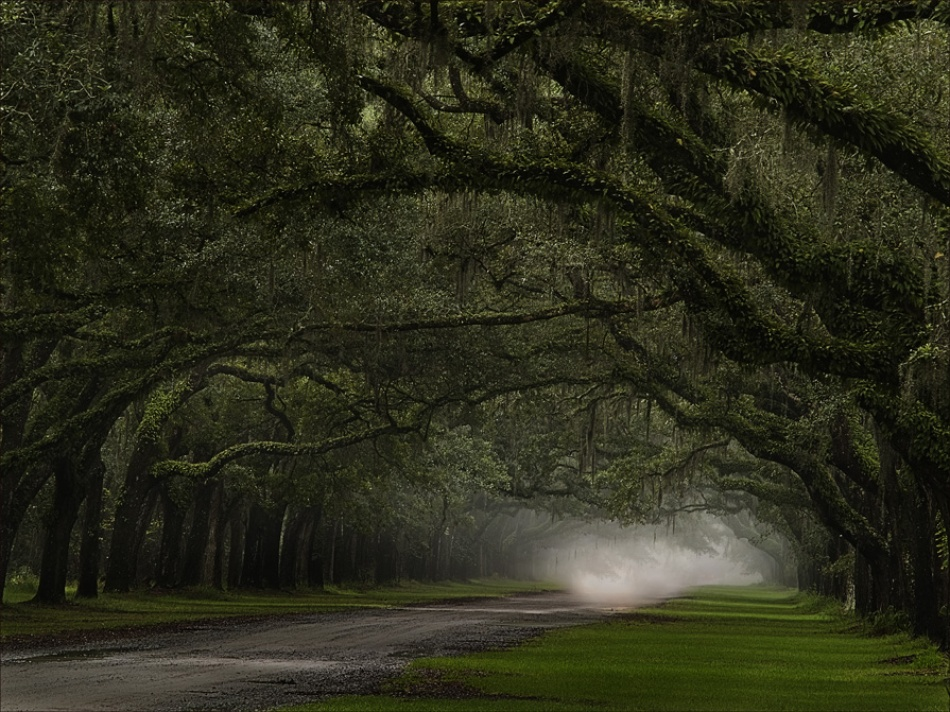 A piece of fine art art photography titled Misty Lane by Bubba