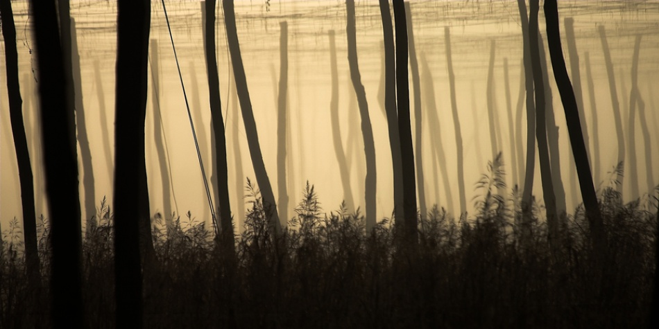 A piece of fine art art photography titled Rods Field by Dare Turnsek