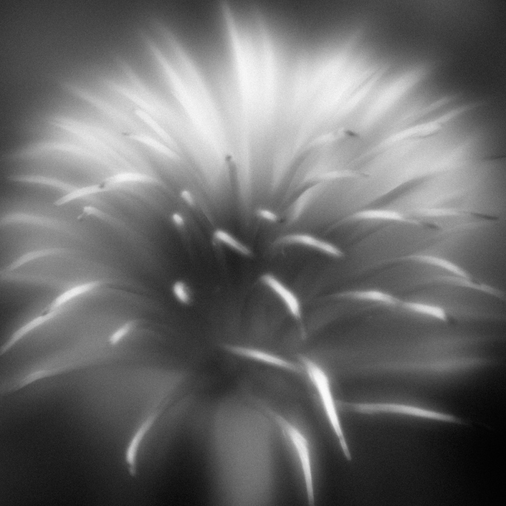 A piece of fine art art photography titled Clematis Fountain by Anne Rose Pretorius