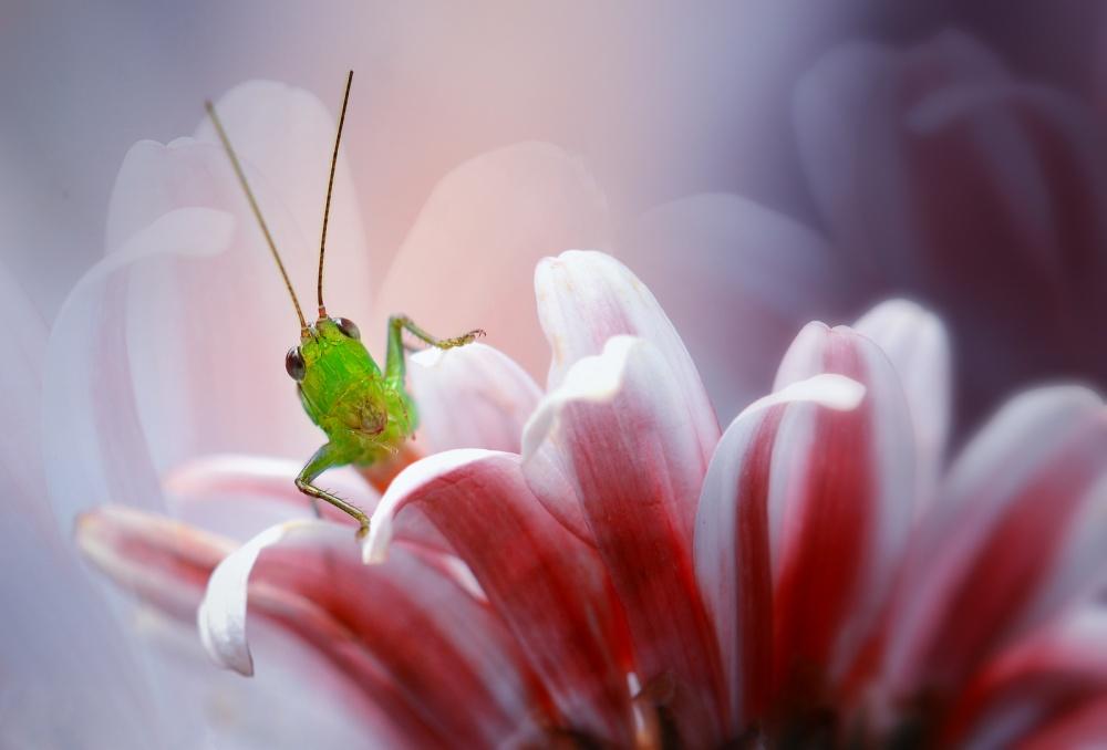 A piece of fine art art photography titled Beautiful In Softness by Nordin Seruyan