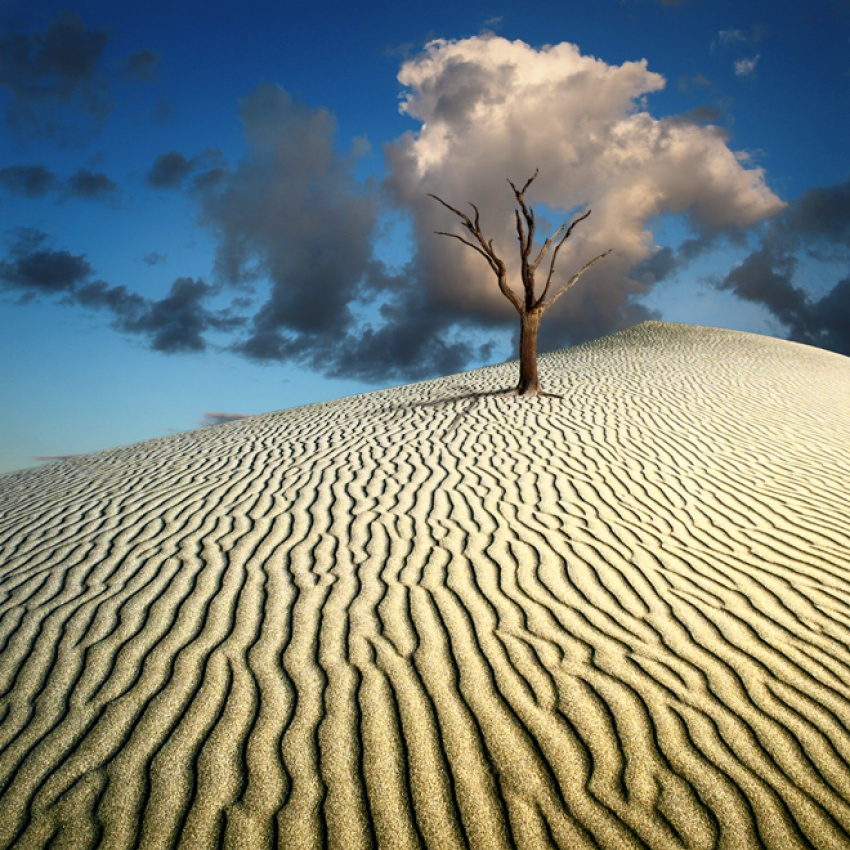 A piece of fine art art photography titled My Cloud Tree by Karlis Keisters