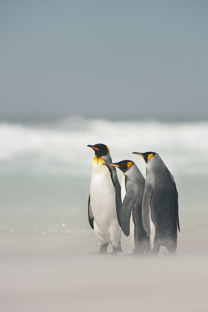 A piece of fine art art photography titled Falklands by Joan Gil Raga
