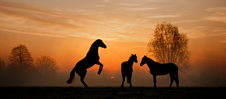 A piece of fine art art photography titled Horses at Sunrise by b.neeleman