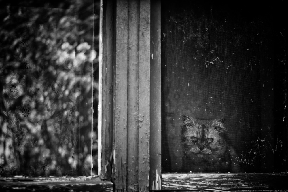 A piece of fine art art photography titled Angry Cat by István Mező