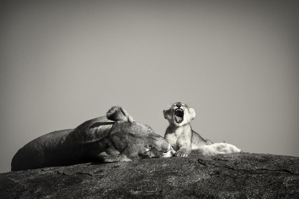 A piece of fine art art photography titled Cub Life, Serengeti by Pekka Järventaus