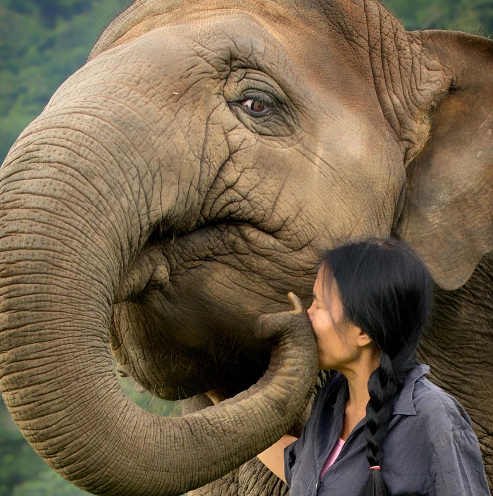 A piece of fine art art photography titled An Elephant Kiss by Svjetlana Smoljan