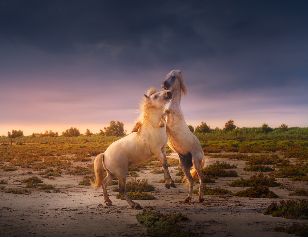View this piece of fine art photography titled France Camargue horses A731236 by Barbara Orienti