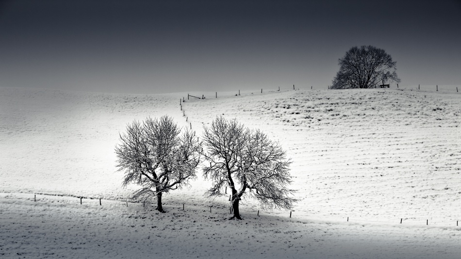 A piece of fine art art photography titled Two Trees by Colmar Wocke