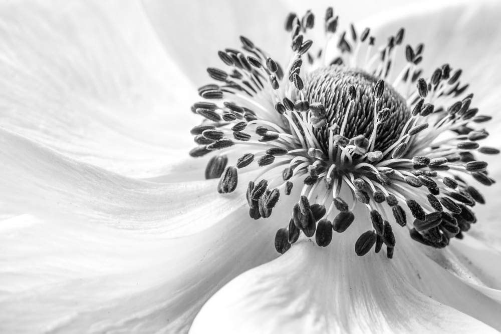 View this piece of fine art photography titled Anemone by Mandy Disher