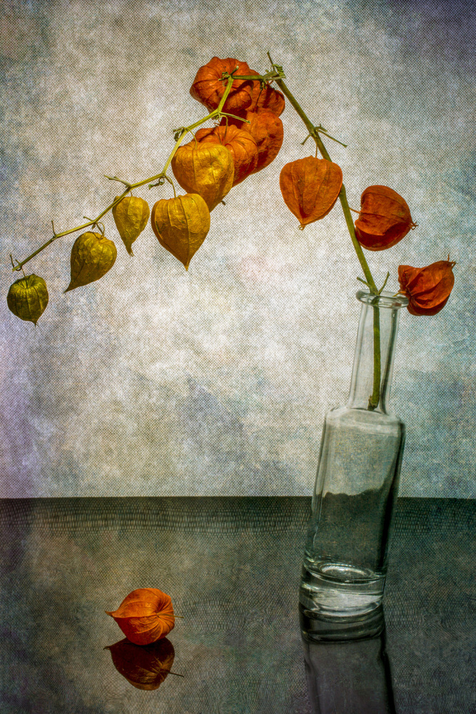 View this piece of fine art photography titled Still life with a branch of Physalis in a slanted bottle by Jacqueline Hammer