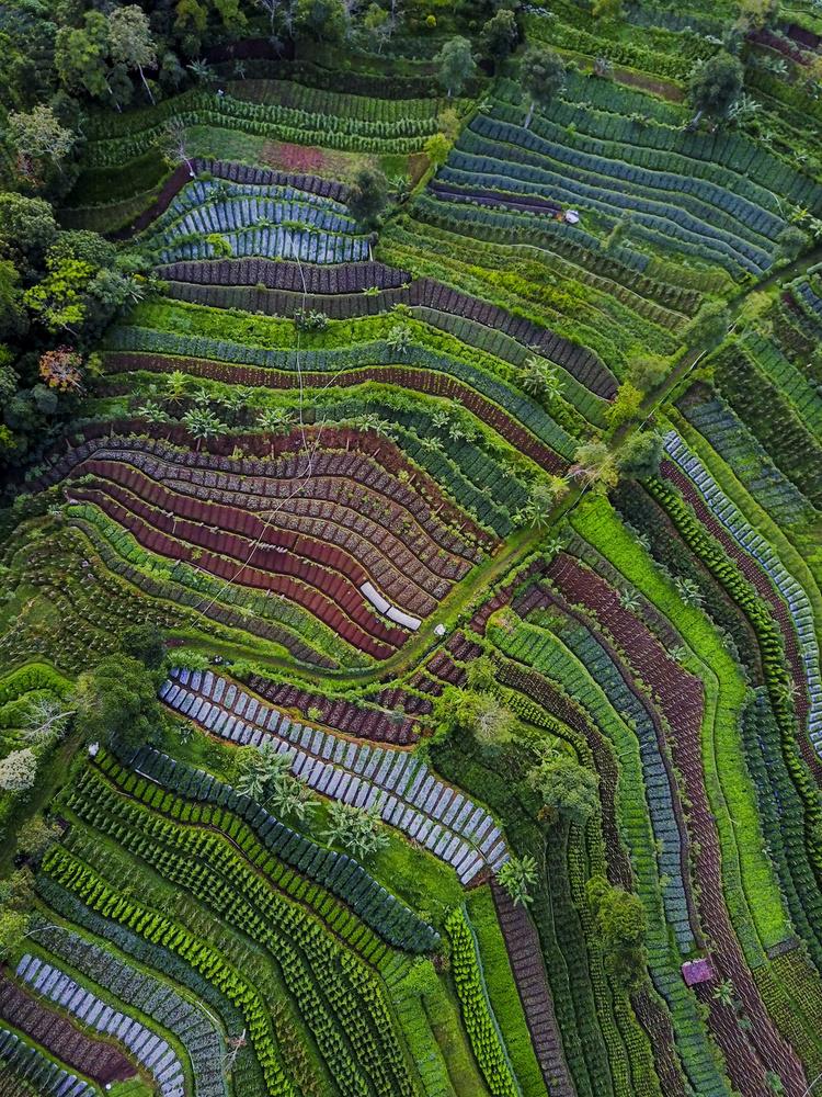 A piece of fine art art photography titled Pattern by Farid Yuwono