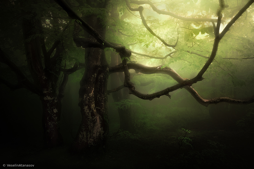 View this piece of fine art photography titled Untitled by Veselin Atanasov