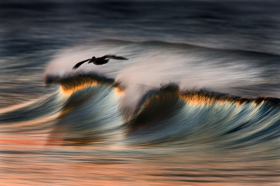 Gliding Over The Wave