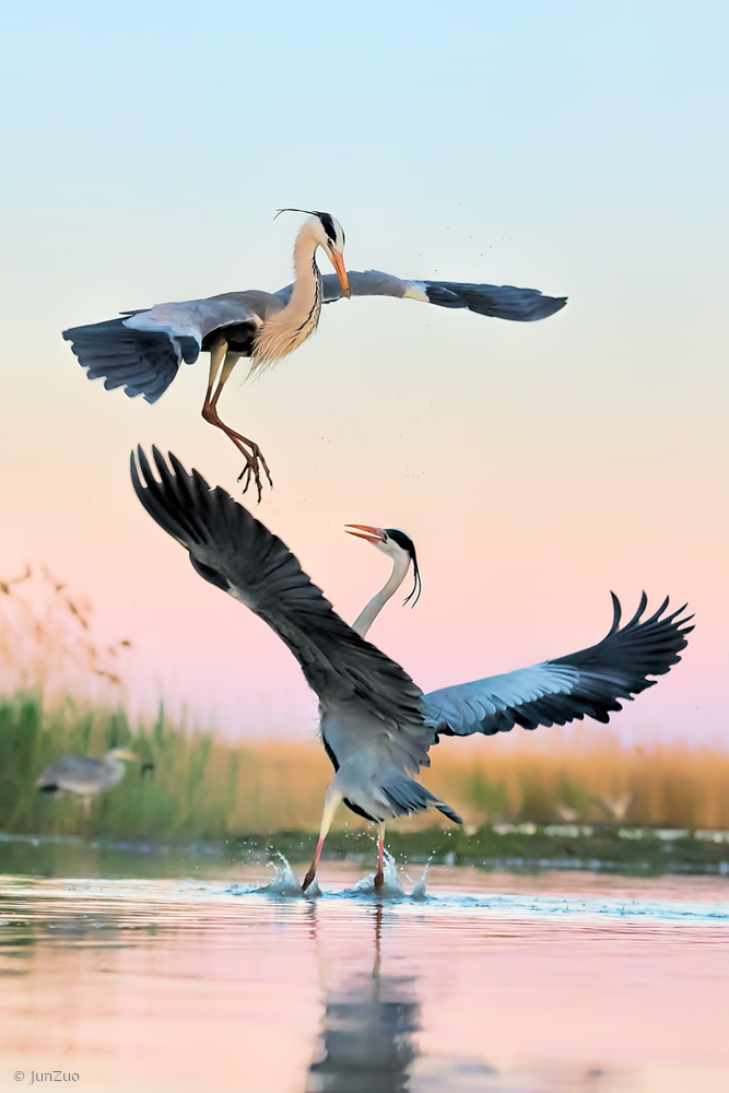 View this piece of fine art photography titled Fight by Jun Zuo