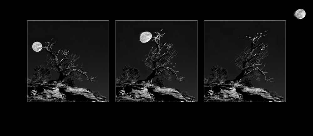 A piece of fine art art photography titled The Moon Thrower Tree by Steven T