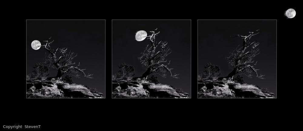 The Moon Thrower Tree