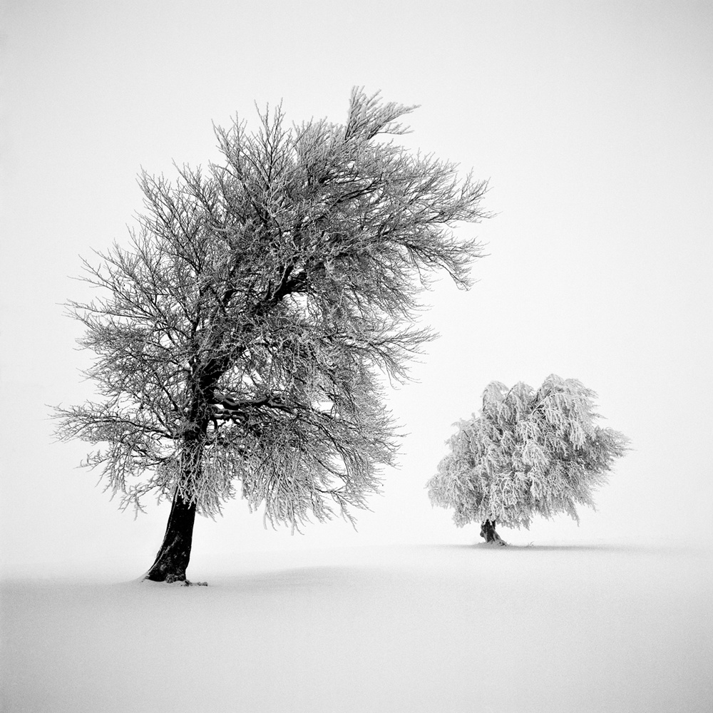 View this piece of fine art photography titled Frozen Life XIV by Michael Schlegel