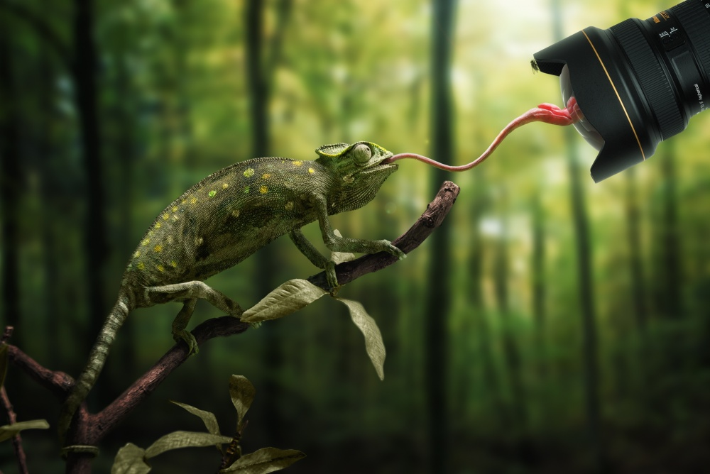 A piece of fine art art photography titled Just a Chameleon Action Shooting With Bait-lens by John Wilhelm