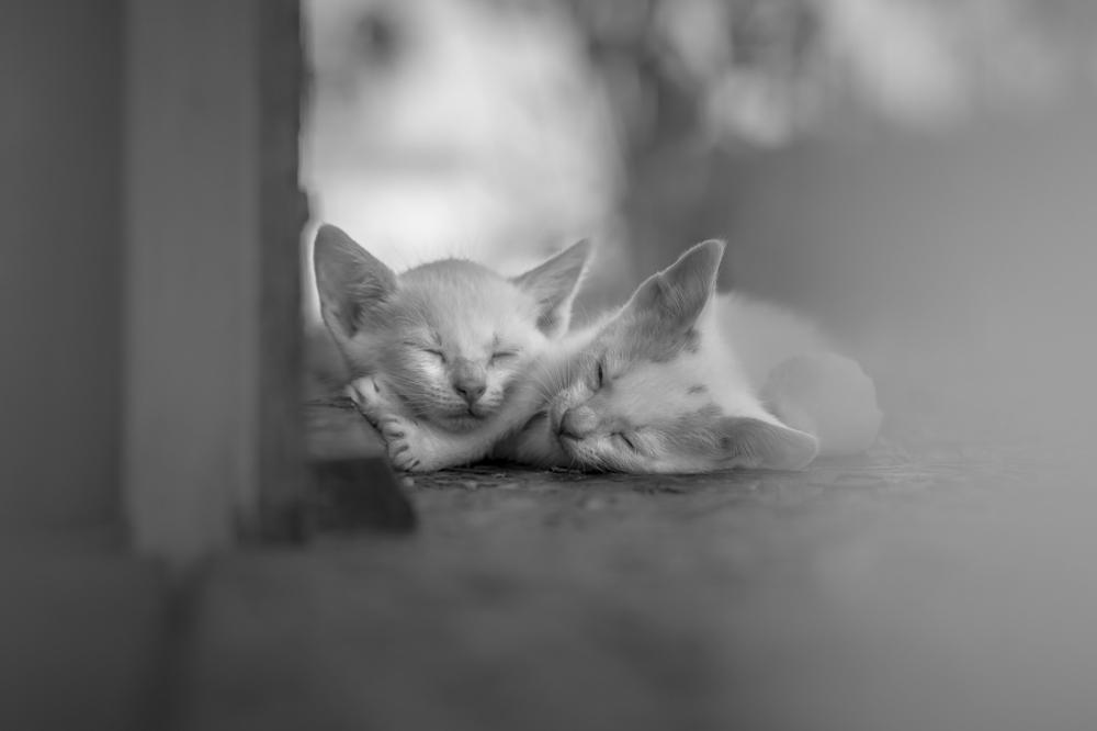 A piece of fine art art photography titled My Sleepy Valentine by Uroš Lunja